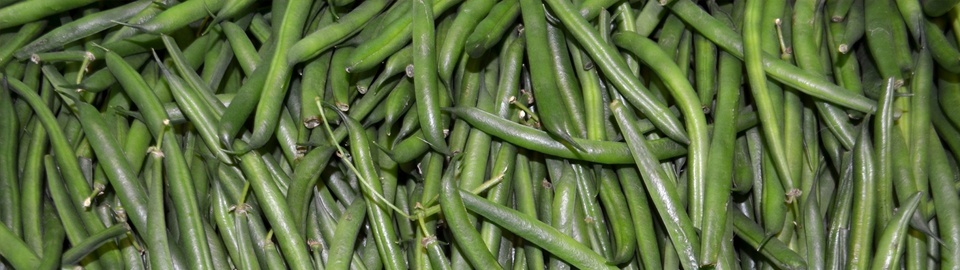 A close up of a large quantity of beans.